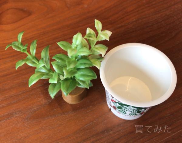 スタバのプリンカップと人工観葉植物を組み合わせてみました!