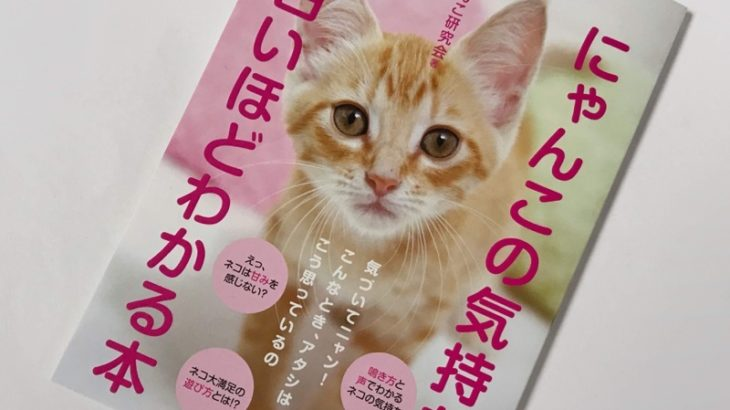 ダイソーの本『にゃんこの気持ちが面白いほどわかる本 』がKADOKAWAブックで面白い!